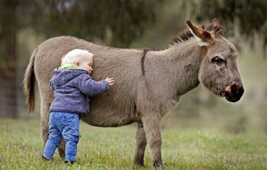 It'll ruin it if you tell them they won't actually meet the donkey