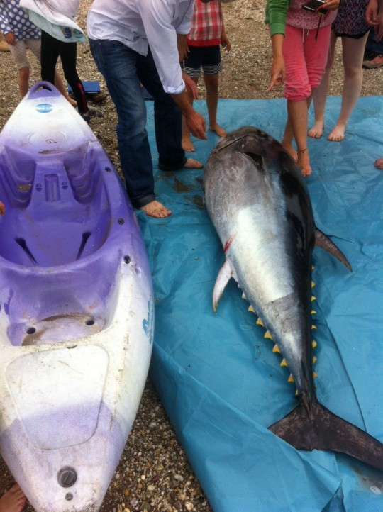 """""""Like a shark"""": the girls struggled to lift the fish into their kayak"""