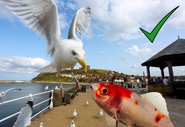 Unsurprisingly Fish Is The First Port Of Call For Seagulls On Hunt A Meal Rspb Spokesman Graham Madge Said When They Re Feeding Naturally
