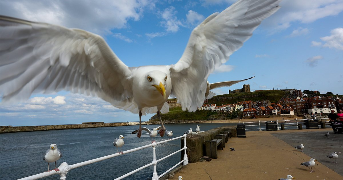 What you should and shouldn't feed a seagull