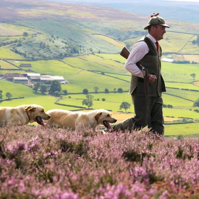 "Peter Snaith, Head Keeper of the Danby Estate, checking over the heather moorland above the Valley in Danby on the North Yorkshire Moors, which is home to one of the area's most popular Grouse Shoots. The 12th August is traditionally known as the ""Glorious Twelfth"" - The first day of the Grouse shooting season. Peter organises and runs the shoots with the help of his gun dogs Gunner and Ernie, both Golden Labradors 12 August 2015"
