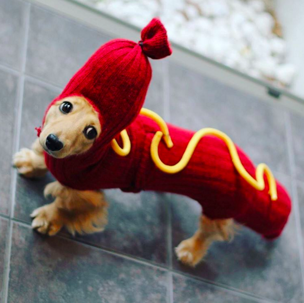What Is The Proper Name For A Sausage Dog
