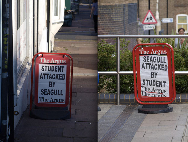 the argus student seagull attack crazy headline
