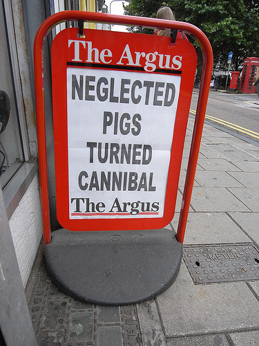 the argus neglected pigs turned cannibal crazy headline