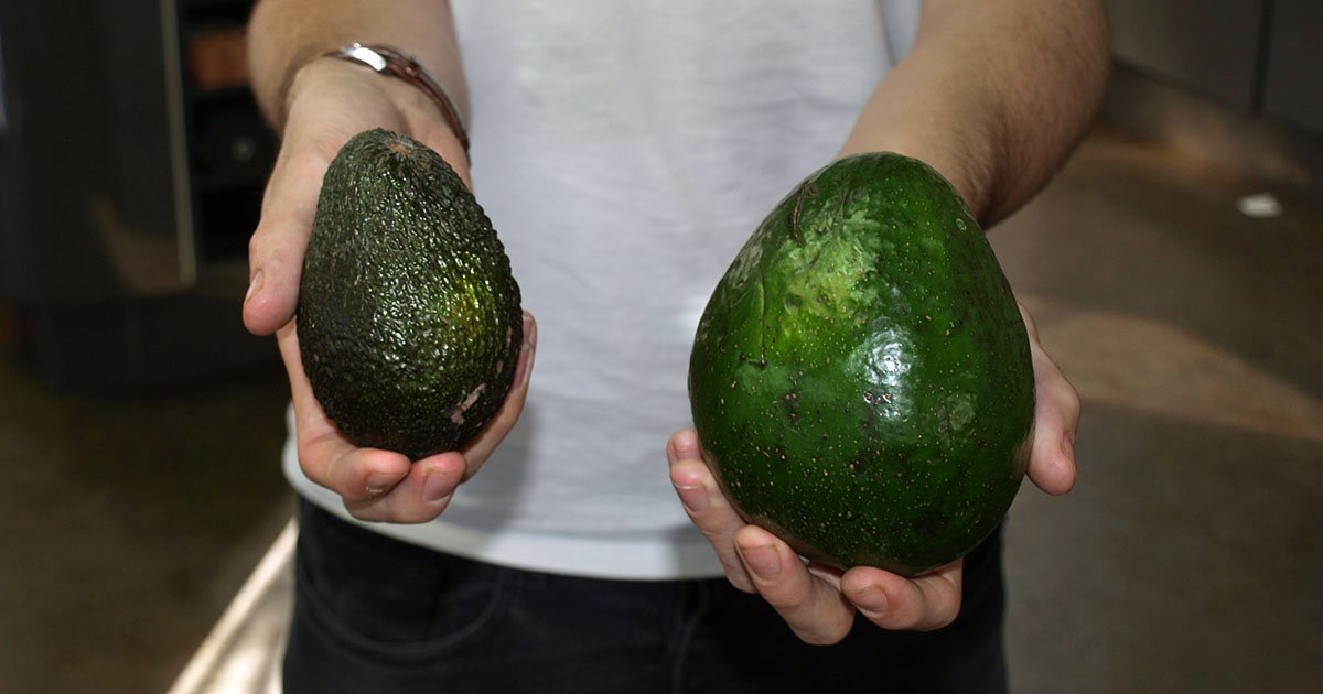 We Tried The Giant Avocado Which Is Five Times The Size