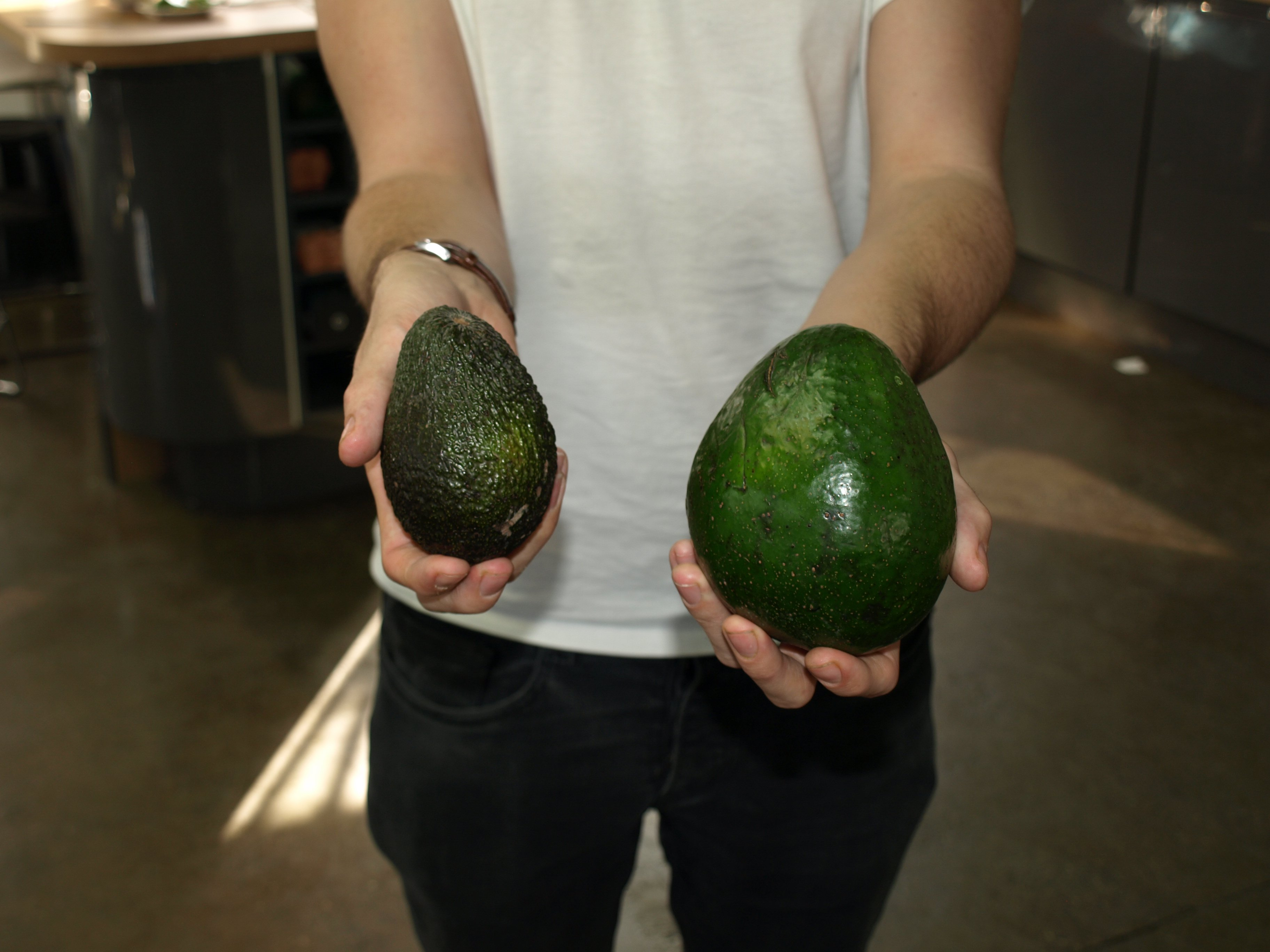 Here it is next to a regular avocado